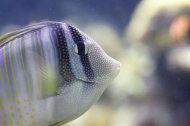 rybka w akwarium