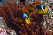 Morskie rybki